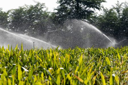 Irrigation system watering young green corn field in the agricultural garden by water springer