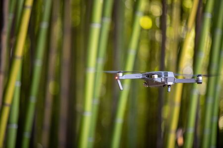 Drone in Bamboo plantation, Green bamboo fence texture background, bamboo texture, Aquitaine, France