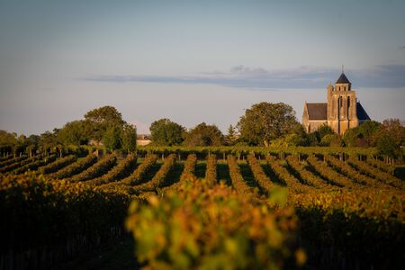 France, Charente, Lonzac, vineyard of Cognac, Church Sainte Marie de Lonzac Stok Fotoğraf
