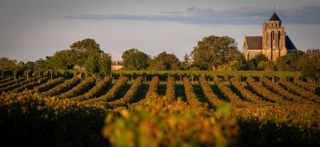 France, Charente, Lonzac, vineyard of Cognac, Church Sainte Marie de Lonzac Zdjęcie Seryjne