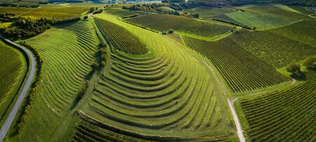 France, Charente, Saint Preuil, Vue aerienne du vignoble de Cognac