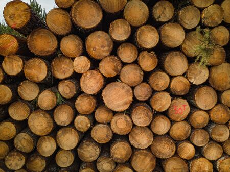 Pine forest Landais, Pile of just cut logs, aerial view