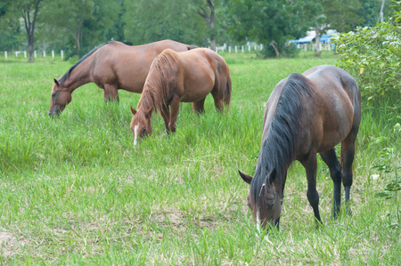 horse collar: Horses eat the glasses.