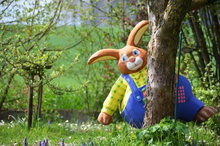 Easter bunny on a spring meadow - The Easter bunny is an Easter symbol