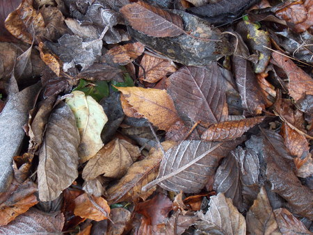 Different Variety of Winter Leaves photo