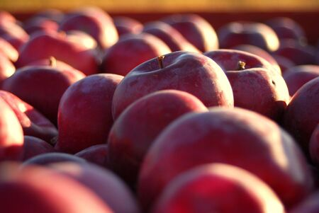 A bowl of fresh picked red apples