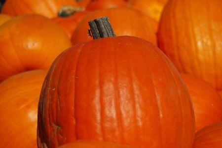Bunch of pumpkins on a farmers market