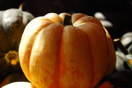 White pumpkin on a farmers market in Vernon