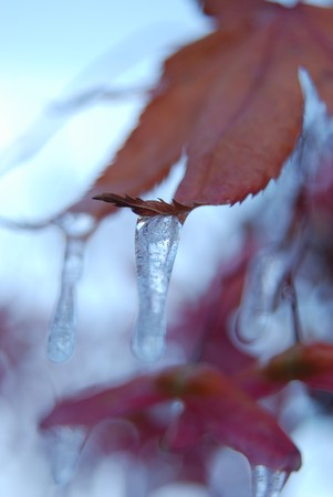 Icicled autumn garden - iced by sprinkler water in the first freezing night. Stock Photo