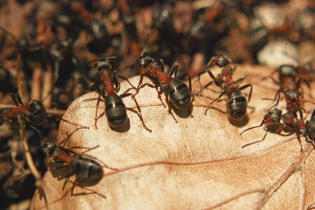 Ants sitting on a leaf Stock Photo