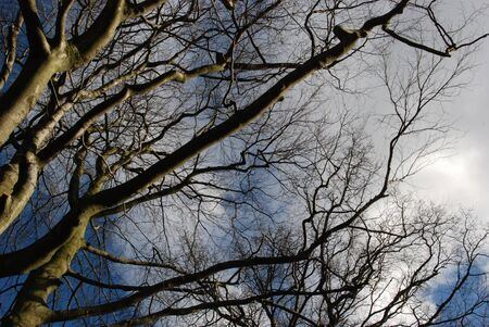 Trees with winter sky