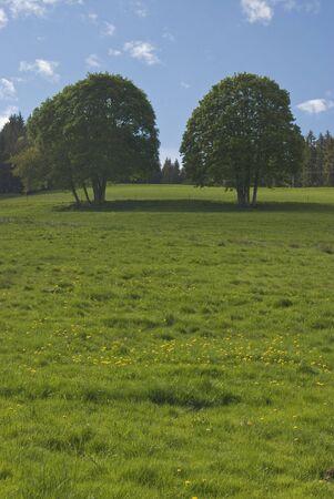 A beautiful meadow full of dandelion flowers Stok Fotoğraf