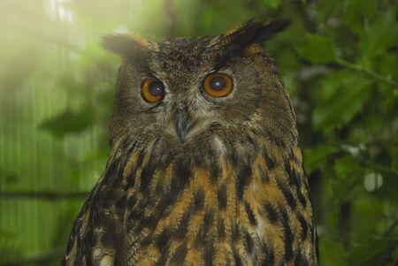 Owl sitting on a tree
