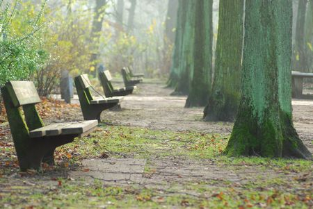 row of park benches and trees in autumn