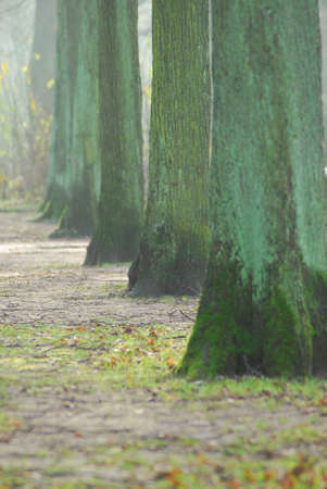 row of wet trees in a park
