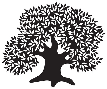 oak tree: Silhouette of the old olive tree