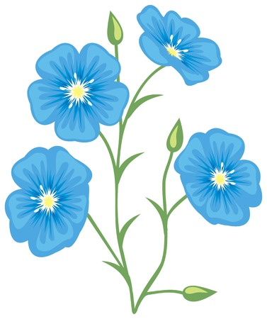 Flower of flax (Linum usitatissimum) 矢量图片