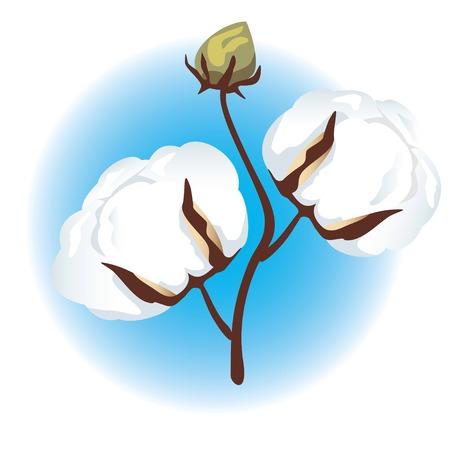 Rama de algodón (Gossypium)  Ilustración de vector