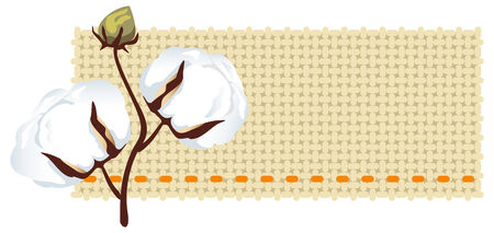 Cotton branch with fabric (Gossypium) Vector