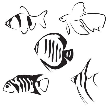 aqu�rio: Aquarium fish. Line drawing in black and white.