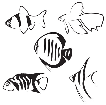 vis: Aquarium vissen. Lijn tekening in zwart-wit.