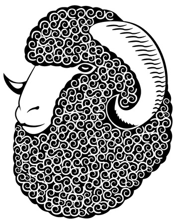 yarn: Portrait of a merino sheep.