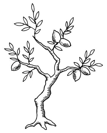 The old lemon tree. Vintage design. Stock Vector - 8051140