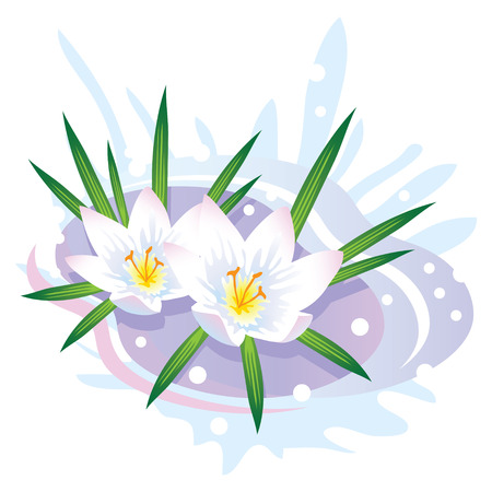 early spring: Crocus Flower. The first spring flowers and snow. Vector illustration.