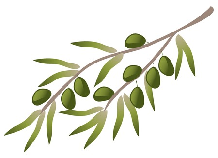 olive branch: A branch of olive tree. Illustration