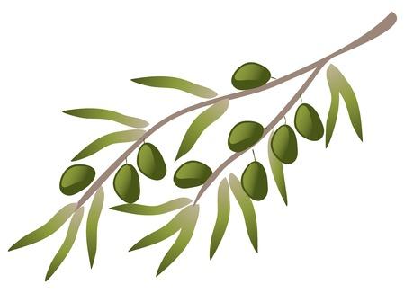 olive branch: A branch of olive tree. Illustration
