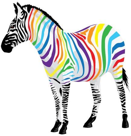 z�bres: Zebra. Bandes de couleurs diff�rentes. illustration. Illustration