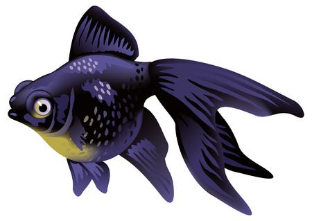 goldfish: Aquarium Goldfish Telescope. Illustration