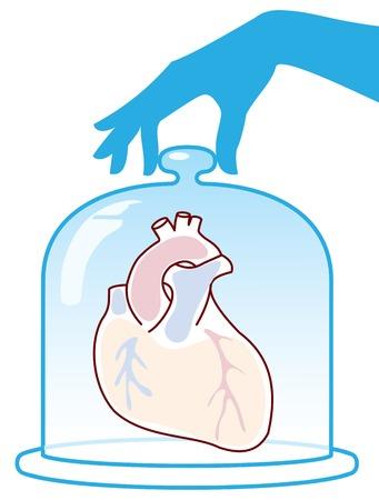 Herz ist durch eine Glasglocke geschützt. Vektor-Illustration. Vektorgrafik