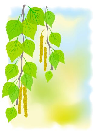betula pendula: Sunny spring background with birch branches. illustration.