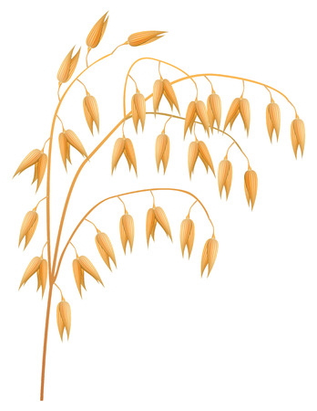 Ear of oats on a white background Illustration