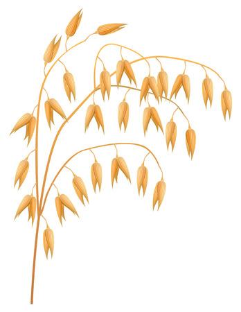 agrario: Oreja de avena sobre un fondo blanco Vectores