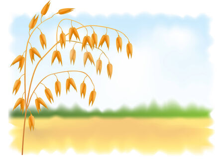agrarian: Ear of oats. Field and sky in the background