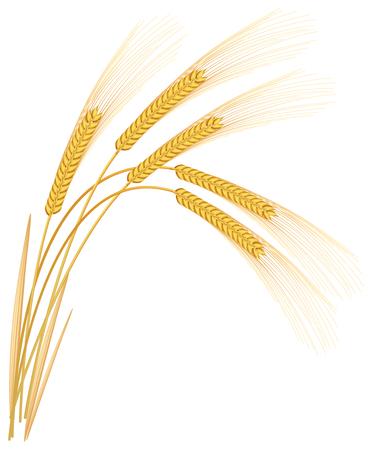 Rogge spikelets op een witte achtergrond Vector Illustratie