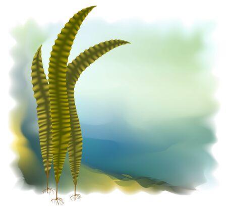 plantas medicinales: Algas japonés (Laminari). Ilustración vectorial.