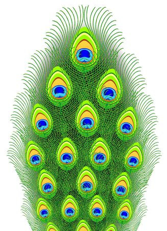 tail feathers: Peacock feathers. Vector illustration.