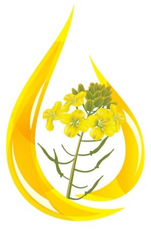 Mosterd olie. Gestileerde druppel olie en mosterd bloem. Vectorillustratie.
