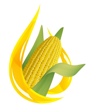 logo de comida: Aceite de maíz. Estilizada gota de aceite y mazorca de maíz. Ilustración vectorial. Vectores
