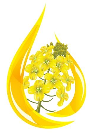 Aceite de canola. Estilizada gota de aceite y colza flor. Ilustración vectorial.