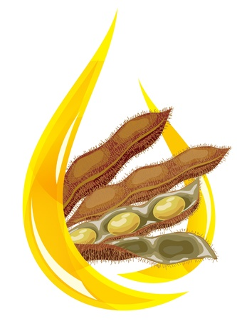 oily: Soybean oil. Stylized drop of oil and soybean pod. Vector illustration.