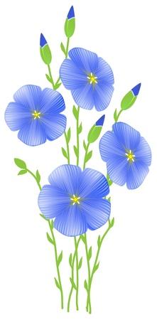 Flower of flax (Linum usitatissimum) Stock Vector - 9317804
