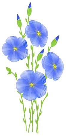 linseed oil: Flower of flax (Linum usitatissimum)