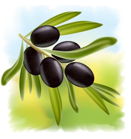 olive green: A branch of black olives. Illustration