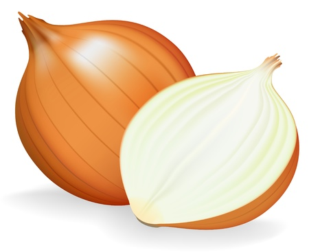 Golden onion whole and half. Stock Vector - 9317798
