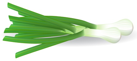 leeks: Fresh green onions on white background.