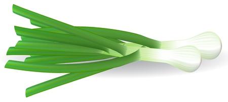 zwiebeln: Frische gr�ne Zwiebeln auf wei�em Hintergrund.  Illustration